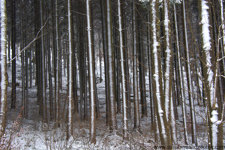 Blackforest